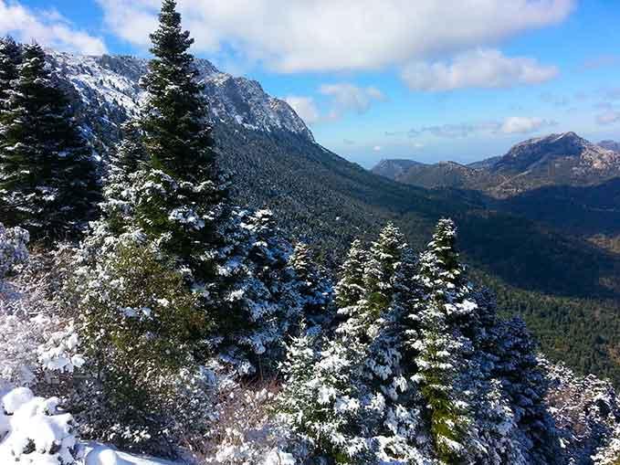 Pinsapar-con-nieve